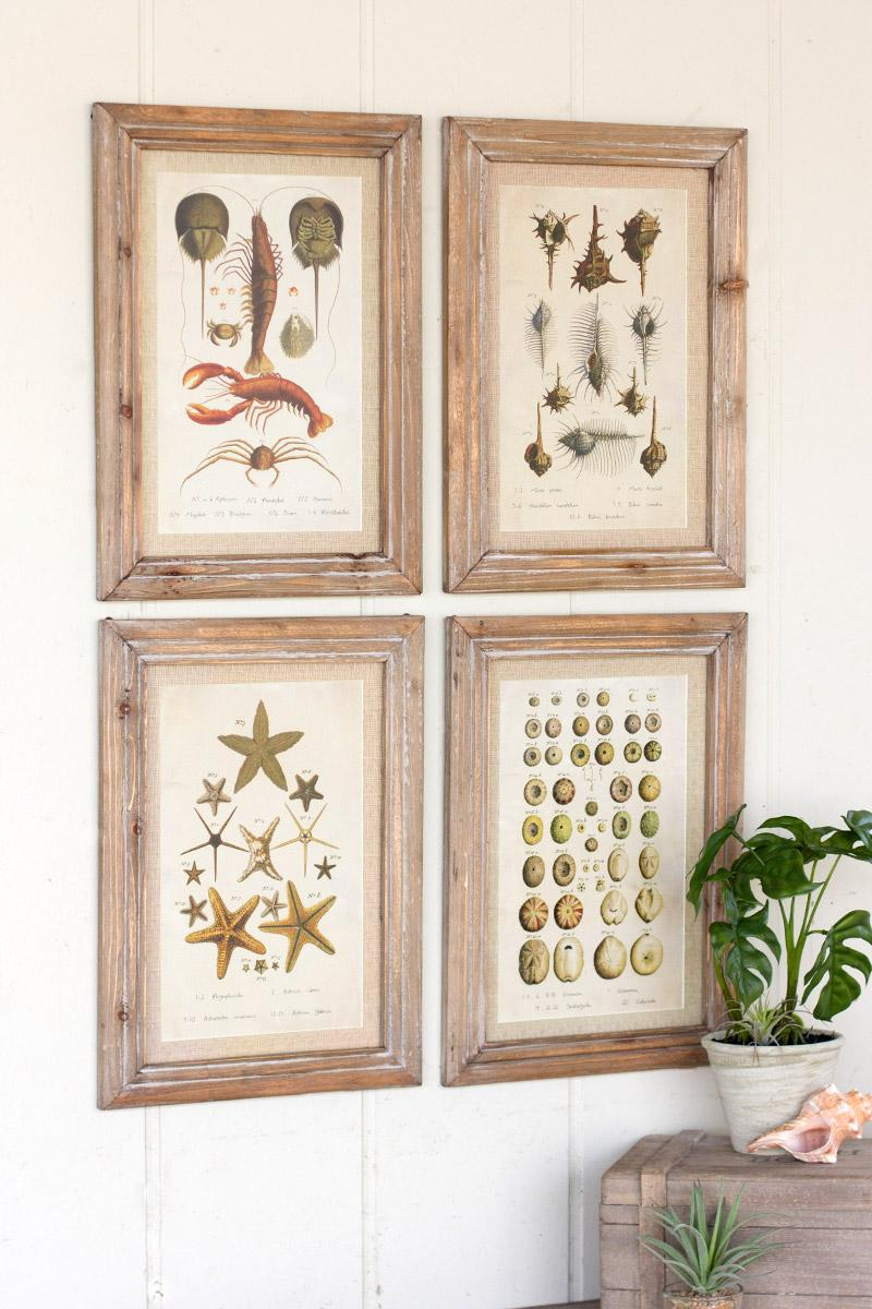 set of 4 sea creature prints under glass