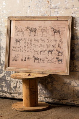 French equine anatomy chart under glass