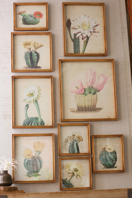 NINE CACTUS FLOWER PRINTS