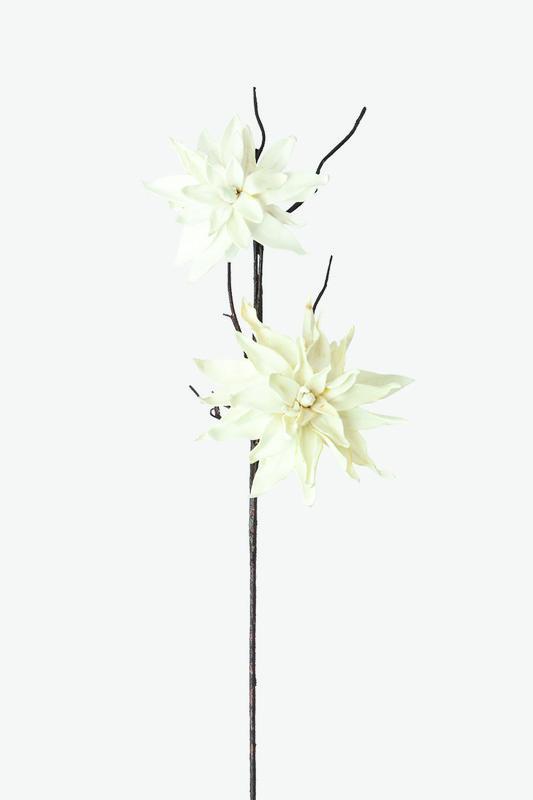eva botanica
