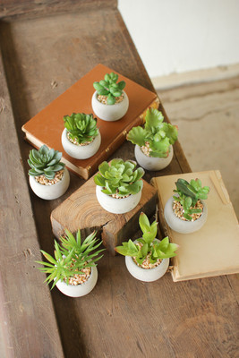 small succulents with cement pots