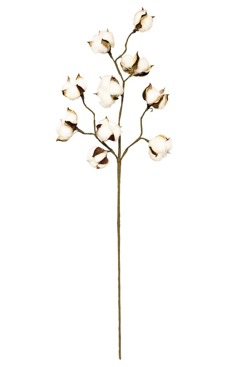 botanica #1097 - cotton stalk 32