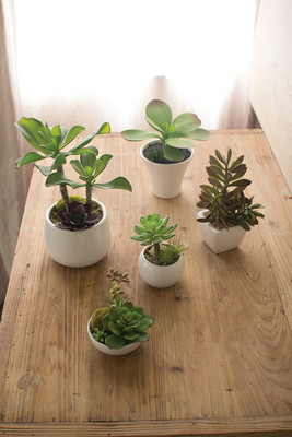 set of 5 artificial succulents with white ceramic pots
