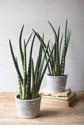 artificial aloe plant with cement pot