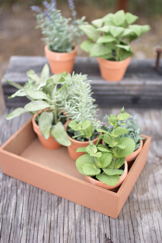set of six assorted succulents in clay pots with wooden container