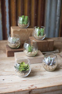 Set Of 6 Succulents With Gl Containers
