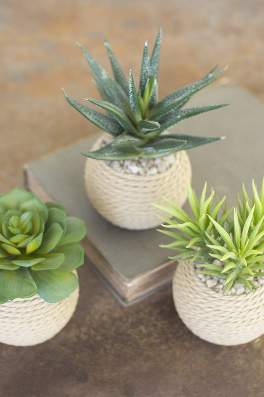 SUCCULENTS ROPED TERRA COTTA POTS